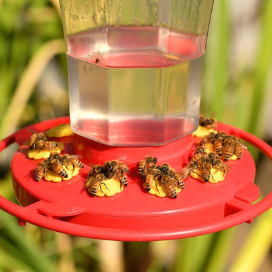 Bee Safe: 6 Ways to Keep Bees Away From Your Hummingbird Feeders