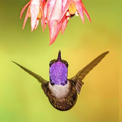 7 Tips on How to Attract Hummingbirds