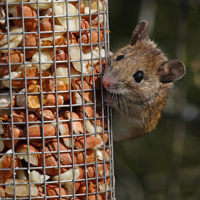 How to Keep Mice and Rats Away from Bird Feeders