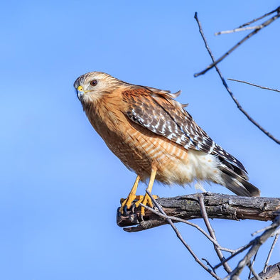 4 Ways to Protect Your Backyard Birds from Birds of Prey