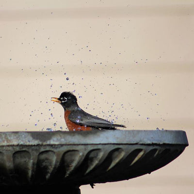 8 Things You Should Know Before Installing a Bird Bath