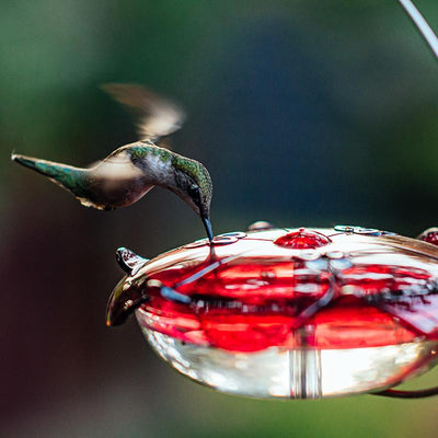How to Modify Your Hummingbird Nectar Recipe Seasonally