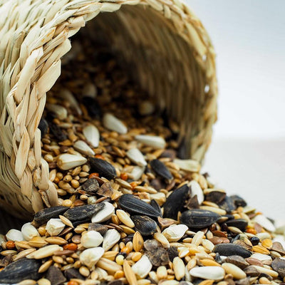 How to Save Money on Bird Seed: Bird Feeding on a Budget