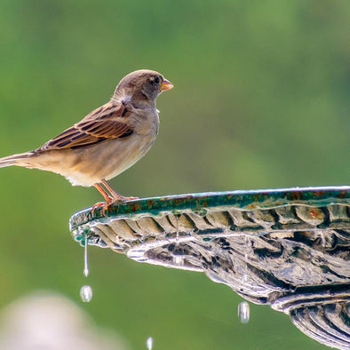 How to Choose the Perfect Bird Bath or Water Feature for Birds