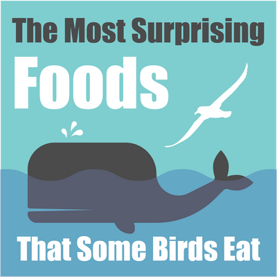 The Most Surprising Foods That Some Birds Eat