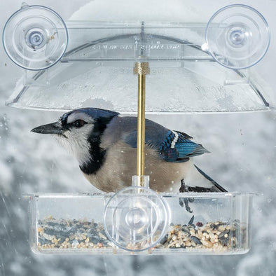 A Guide to Window Bird Feeders