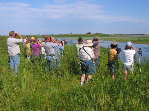 A group of adults birding with binoculars around a bog.
