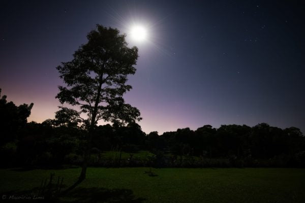 Moonlit park with trees, grass and a purple and pink night sky