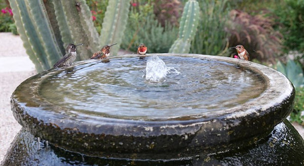 hummingbirds perched at fountain
