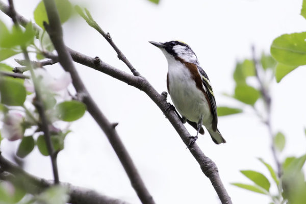 bird on small tree branch