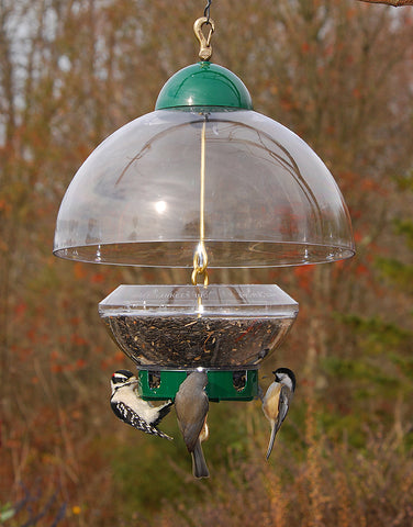 Large domed bird feeder with birds eating from it
