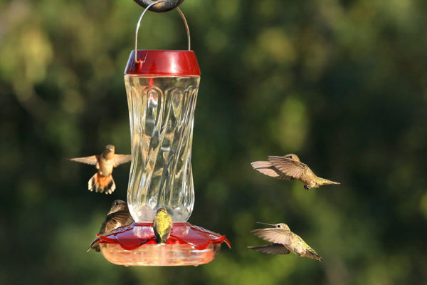 hummingbirds hovering around bird feeder