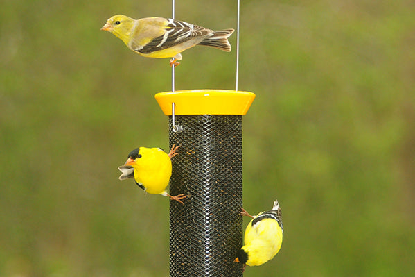 Yellow bird feeder with finches