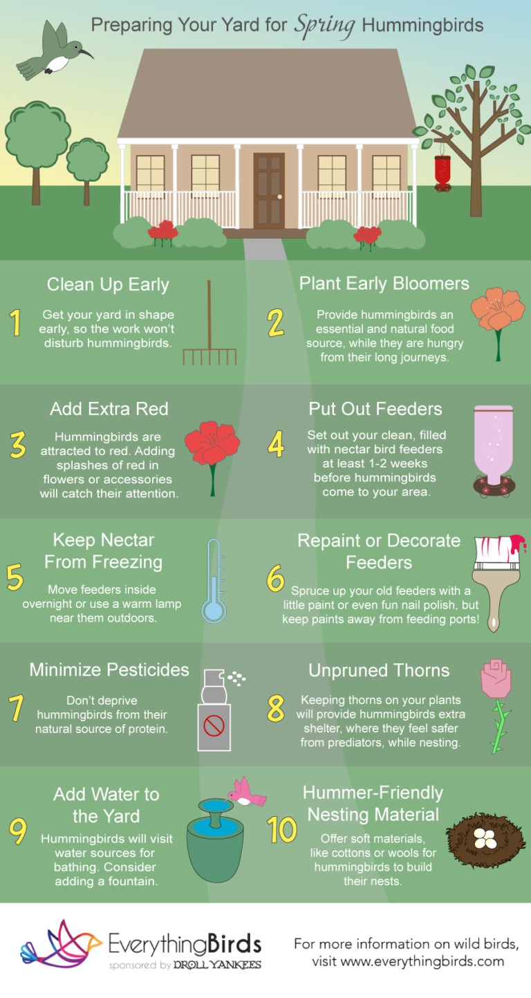 An infographic showing how to prepare your yard for spring hummingbirds.