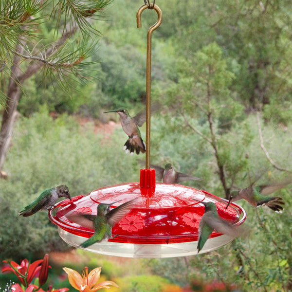 hummingbirds at hummingbird feeder