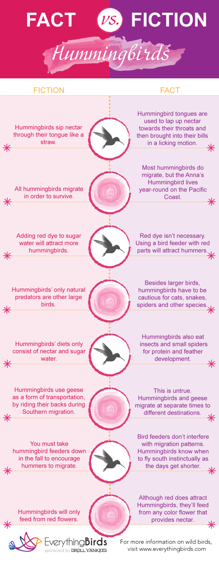 Hummingbird Fact vs Fiction