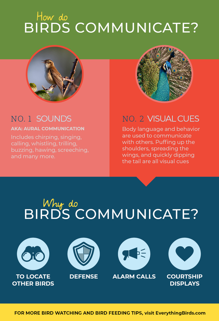 Infographic about how birds communicate