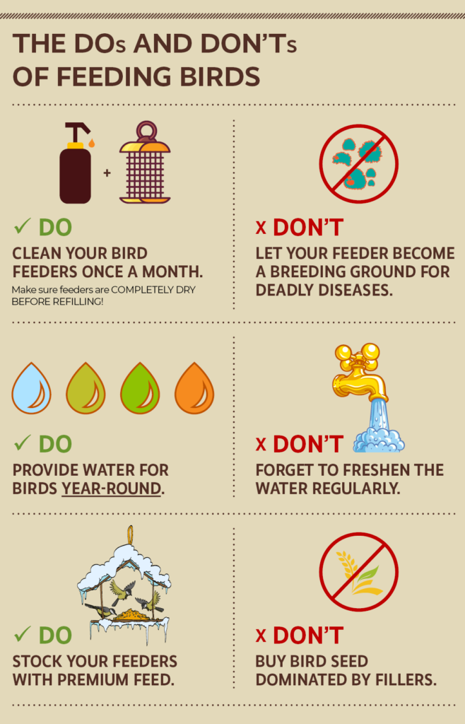 infographic about the top bird feeding mistakes