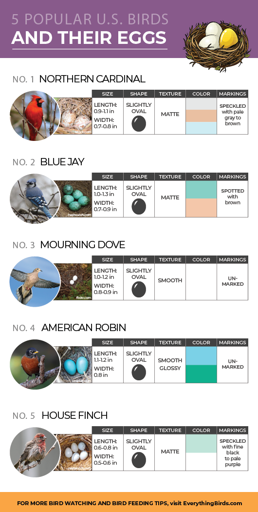 Infographic about identifying common bird eggs