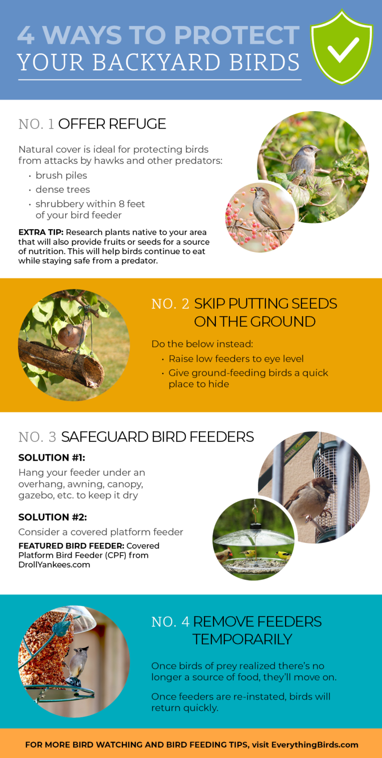 Infographic about protecting birds from predators