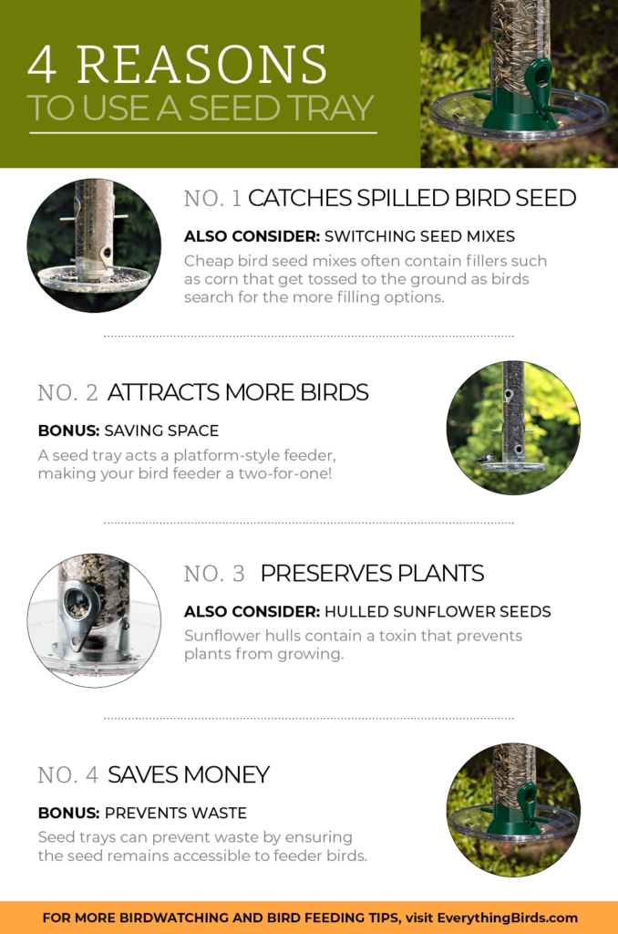 infographic about seed trays for bird feeders