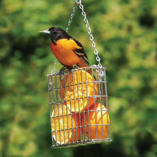 Bird perched atop fruit-filled feeder
