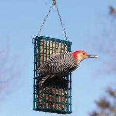 woodpecker eating suet from a hanging cage