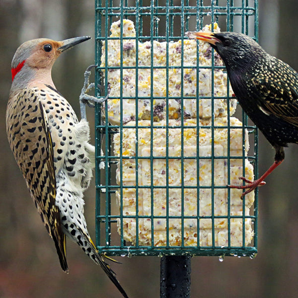 two birds eating suet from suet feeder