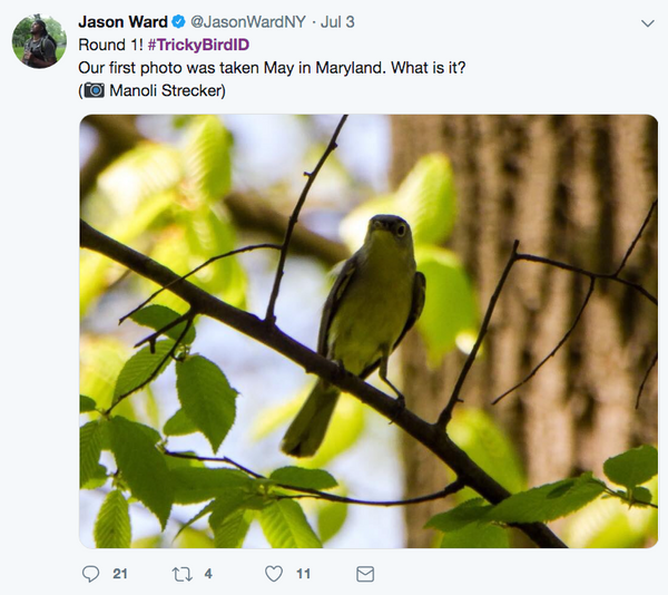 Bird identification game on Twitter