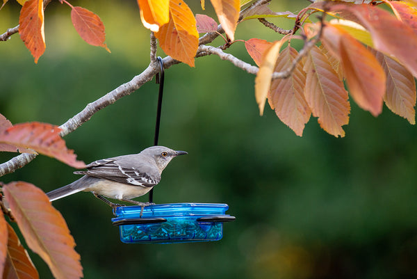 More Birds® Snacks'N'Treats® Single Dish Bird Feeder With Metal Hook