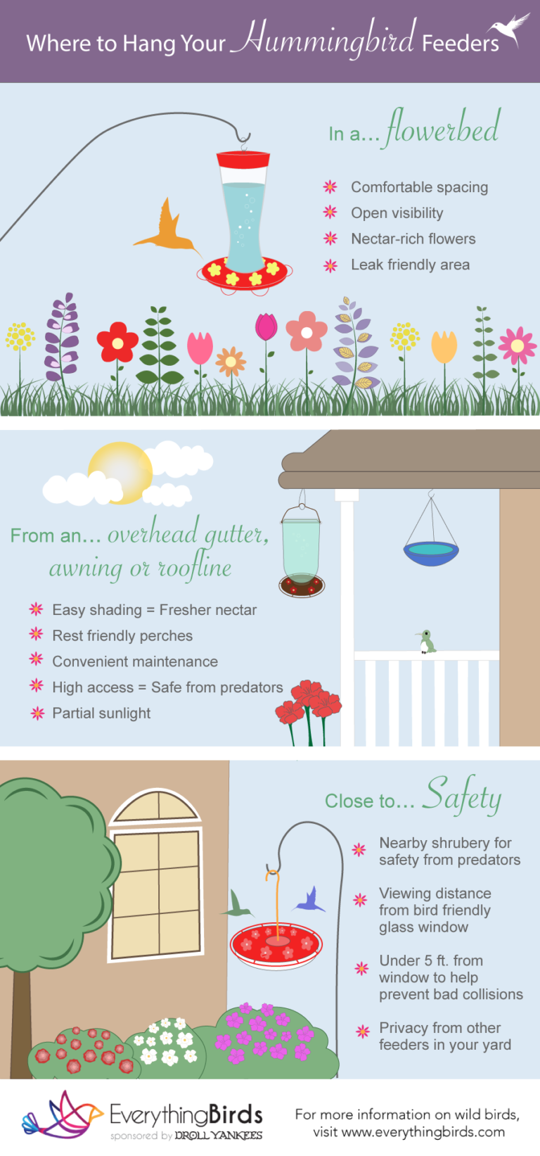 An infographic showing where to hang hummingbird feeders in your yard.