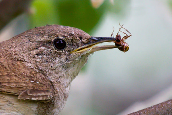 Bird holding bug in its beak
