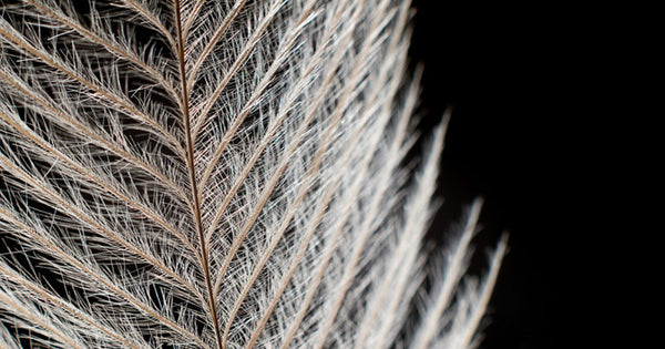 Close view of a bird's feather