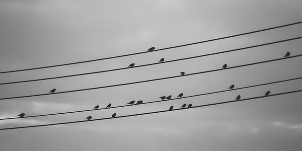 Birds clinging to electrical wire