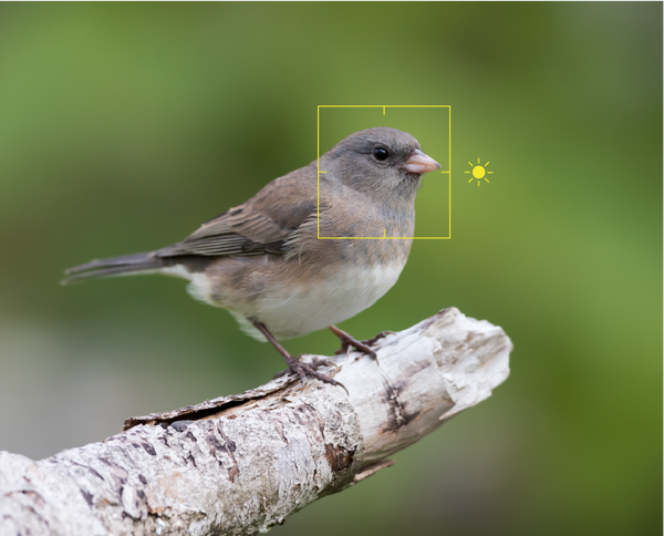 Photo of a gray bird, demonstrating camera focus
