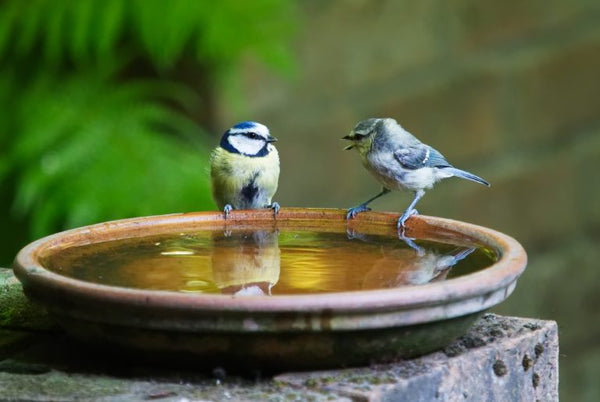 Two birds perched on the edge of a bird bath.