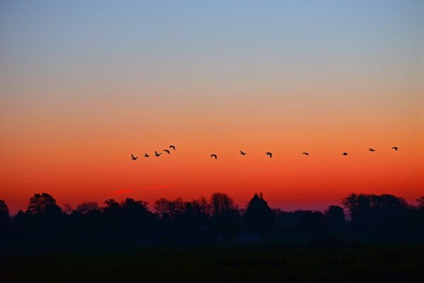 birds flying at dawn