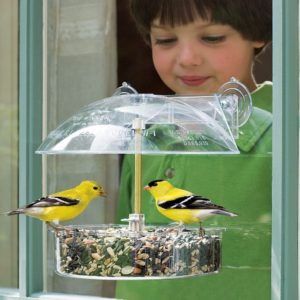 boy looking out window at bird feeder