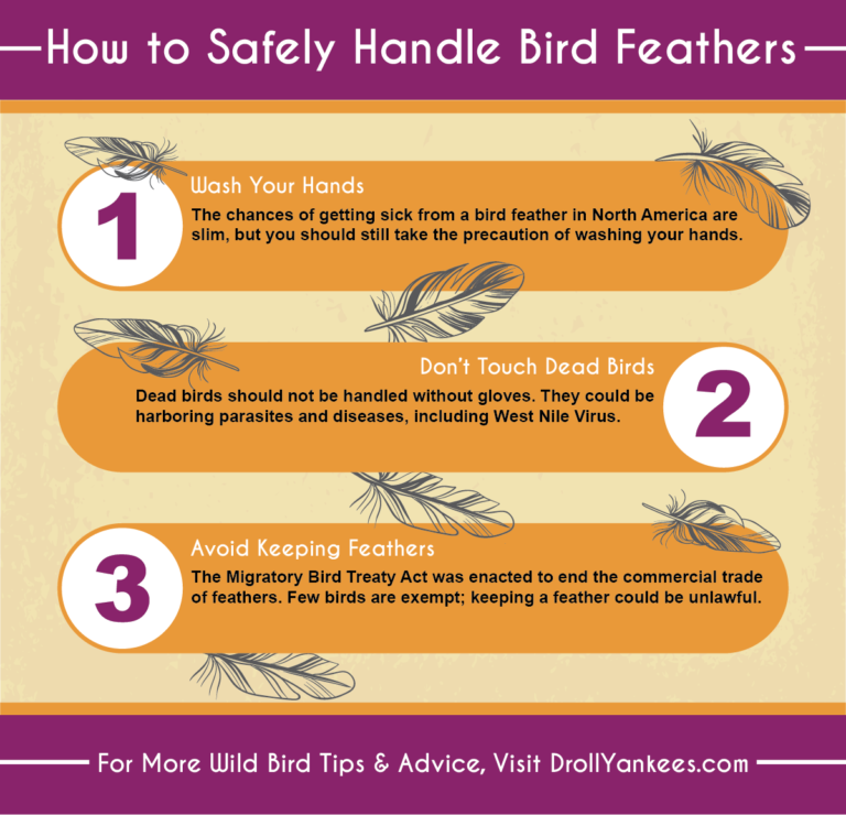 how to safely handle bird feathers