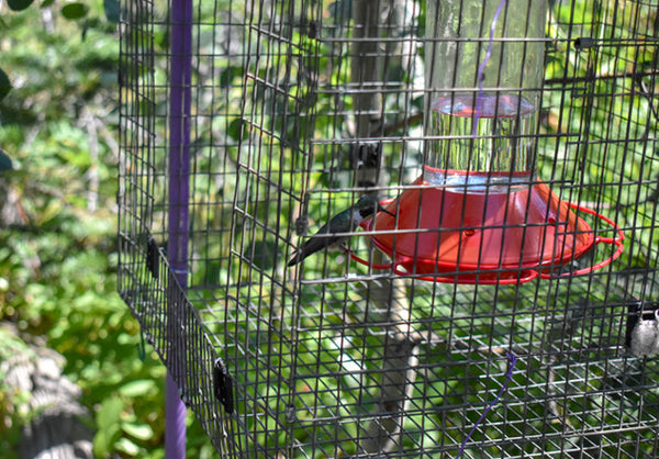 Hummingbird feeder inside cage