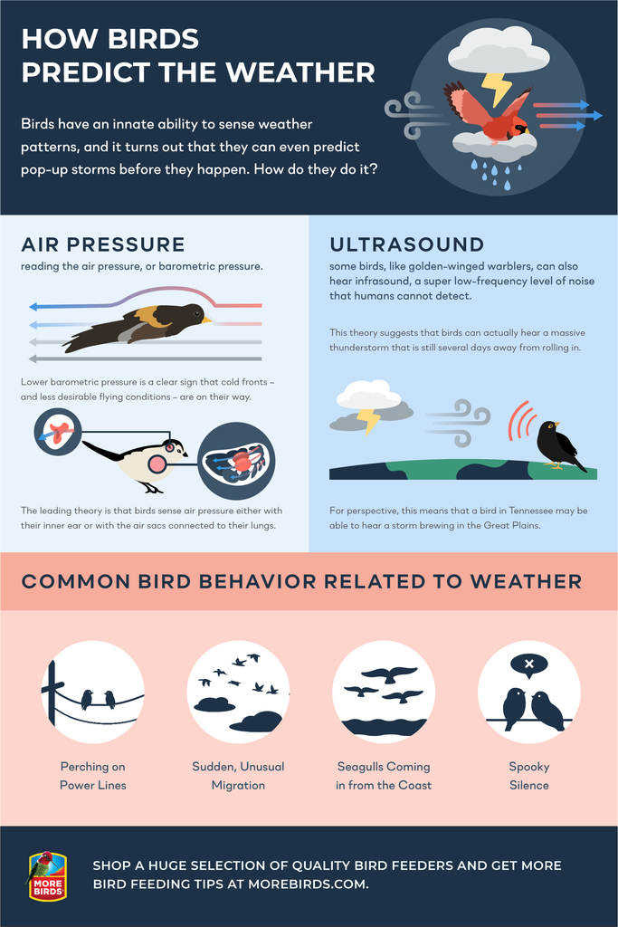 How birds predict the weather