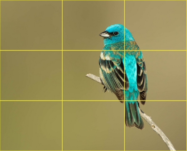 Photo of a teal colored bird that demonstrates the rule of thirds