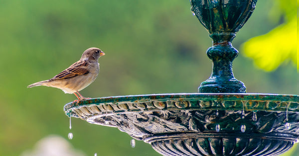 Sparrow perched at a fountain