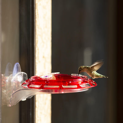 More Birds® Bird Health+™ 3-in-1 Hummingbird Feeder, 6 oz. capacity
