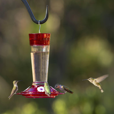 hummingbirds feeding from More Birds® Bird Health+™ Ruby Hummingbird Feeder