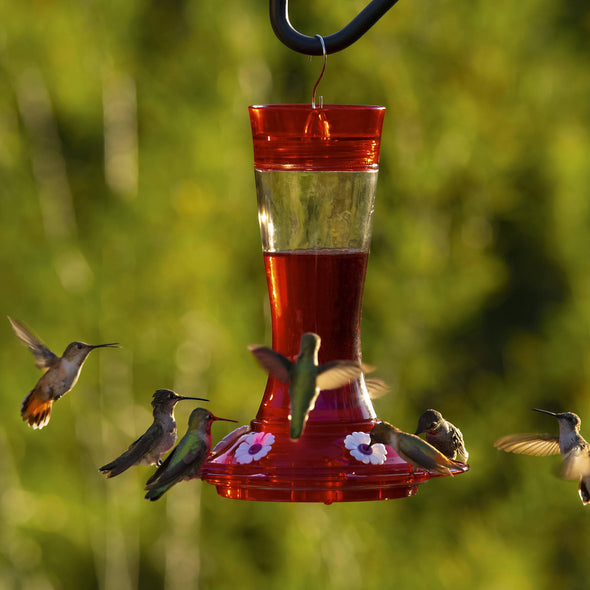 More Birds® Bird Health+™ Natural Red Powder Hummingbird Nectar Concentrate Accessory More Birds