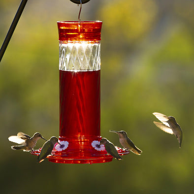 hummingbirds feeding from More Birds® Bird Health+™ Diamond Hummingbird Feeder