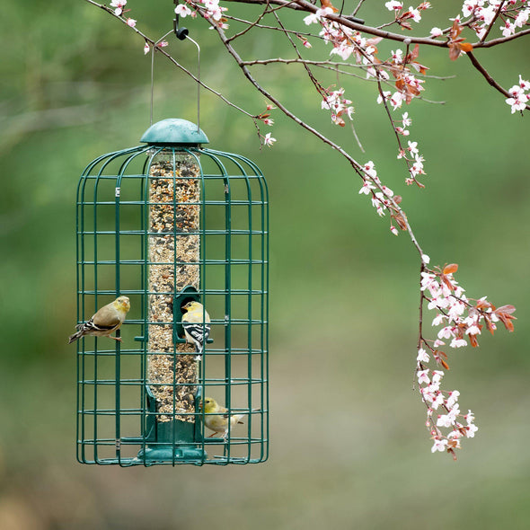 Squirrel-X™ Squirrel-Resistant Caged Bird Feeder, 1.5 capacity Bird Feeder Squirrel-X by More Birds