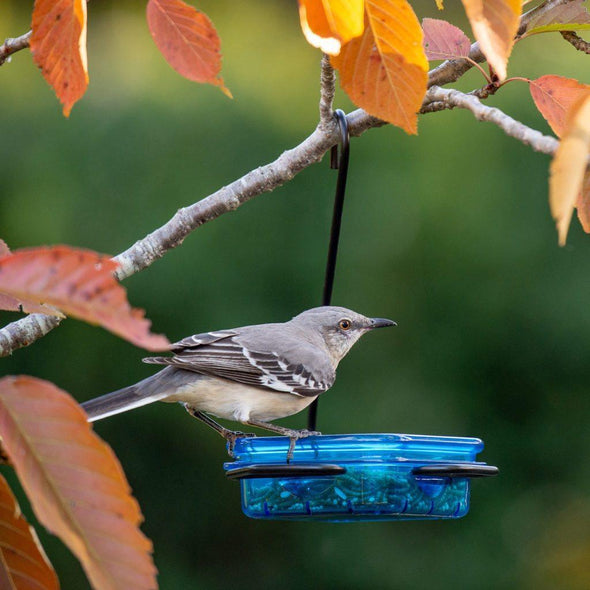 Northern Mockingbird eating mealworms from More Birds® Snacks 'n' Treats Single Hanging Feeder