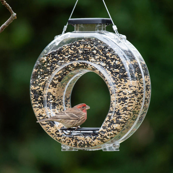 More Birds® Canteen Hopper Bird Feeder With Fly-Through Center, 4.7 lb. capacity Bird Feeder More Birds